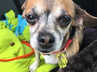 Vivian is an older female who is mellow and loving.