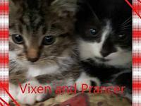 Vixen's story Kittens that have not been spayed or