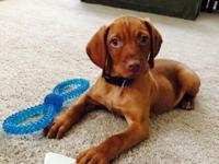 We are taking deposits for our winter litters now due
