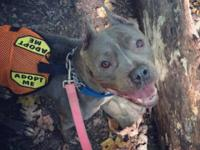 Volunteer Annalisa took adoptable JOY out on a doggie
