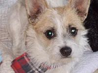 Wade's story Adorable little Terrier Mix dog. He is shy