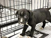 Wags's story Meet Wags, she is an eight week old Lab