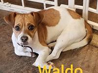 Waldo's story Waldo is a sweet, loving and energetic