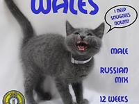 Wales's story You can fill out an adoption application
