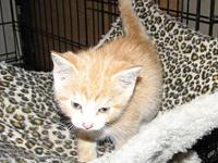 Walka (baby boy)'s story Meet Walka a red tabby with