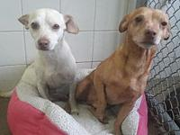 Walker's story Westly and Walker were found as strays