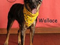 Wallace's story Woof! My name is Wallace! I am one of