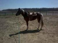 APHA 3 year old mare. Started under saddle, 60 days of
