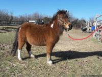 We offer to bring a miniature pony and/or a horse to