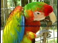 Hello everyone , Wanted all macaws , I will trade you a