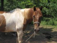 I am looking for a free or cheap broke horse. I need it