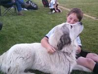 We are looking to add a Great Pyrenees puppy to our
