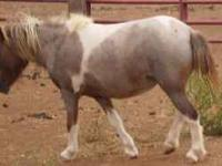 I'm looking for a mini mare no more then 36 inches