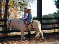 I am looking for a free miniature horse. It will have a