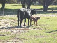 WANTED: GRAZING LAND FOR MY CATTLE Lake/Sumter/Marion