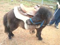 I have a 2 year old unregistered mini mare to trade for
