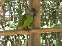 I'm interested in buying a young parrot preferably an
