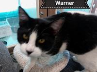 Warner's story This little guy we have named Warner. He