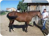 Wassalla is a beautiful bay mare who is quite bossy.