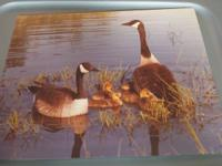 I've 8 pictures of the Canadian geese household in a