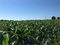 Farmers and investors looking for 115 acres m/l of