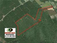 Great hunting tract with potential for future timber