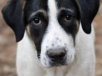 Watney's story You can fill out an adoption application