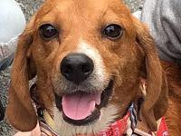 Watson *Adoption Pending *'s story Fundraiser: