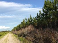 Hunters and Land Investors! Don't miss out on this