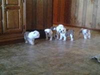 They are ready for their new family. Beautiful puppies,