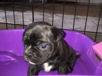We have 3 female Bugg's looking for their new
