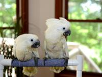 ***** We have lots of infant birds to choose from.