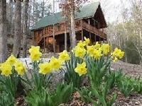 Our cabins is found in the Heart of Wears Valley,