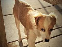 My story This dog must be picked up in Barstow Calif.
