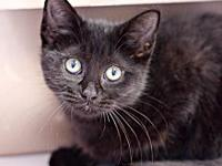 Wednesday's story AVAILABLE FOR ADOPTION AT NEWAYGO