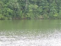 2.69 acre wooded waterfront lot on Lake Wedowee with