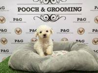 Breed: Wee Poo (West Highland & Poodle Mix) Nickname: