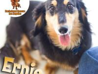 Dachshund Rescue of Los Angeles Adoptions Sun Nov 9 at