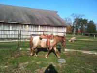 3 yr old Sec. A Gelding. Sire is Western Raraby and is