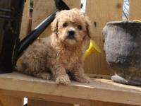 Ciao!I am Wendall,the handsome male