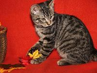 Wendy's story Wendy is an adorable female kitten who