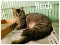 Wendy's story Meet Wendy, This long-haired beauty is as