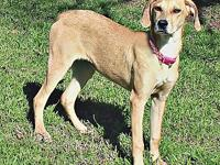 Wendy's story Wendy Female Hound mix? Approx 5 months