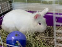 adorable friendly 10 mth old baby bunny with a fluffy
