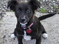 Hi, Im Wesley! I am a 5 month old, 16 lb., black and