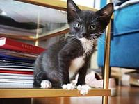 Wesley's story Wesley was a seemingly normal kitten at