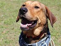 Wesley's story Hi, Im Wesley! I was rescued by CARE and