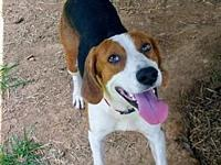 Wess's story Wess is an active energetic hound dog who