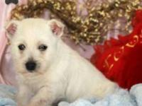 Only a few West Highland Terrier pups are available,