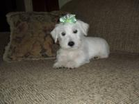 i have a male and female west highland terrier they are